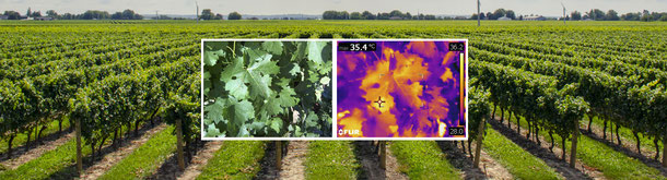 THERMOGRAPHIE VITICULTURE